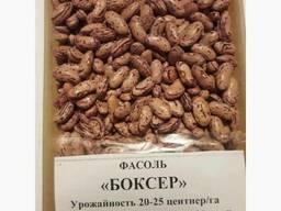 Фасоль очищенная высокого качества оптом от производителя - photo 3