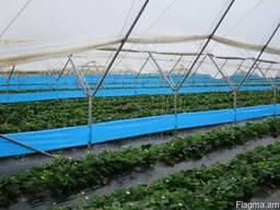 Голубые рулонные ловушки 30см*100см - photo 2