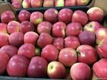 Польское яблоко от производителя La-Sad - photo 3