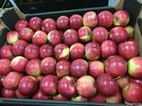 Польское яблоко от производителя La-Sad - photo 5