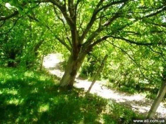 Приусадебный зем. участок в Арагацотнской области