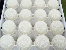 Сырные формы (блок-формы для само-прессования сыра)