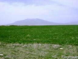 Земельный участок в с. Аралер - фото 5