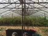 Продается земельный участок в селе Овташат Масисского района - фото 5