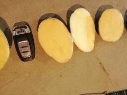 Картофель - Огромный объём - идеальное качество