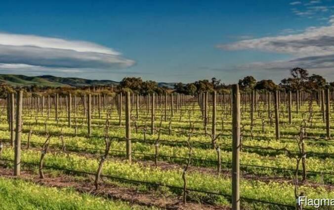 Колья оцилиндрованные, столбы виноградные, палисады