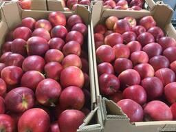 Польское яблоко от производителя La-Sad - photo 1