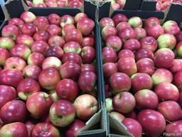 Польское яблоко от производителя La-Sad - photo 4