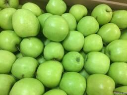 Польское яблоко от производителя La-Sad - photo 7