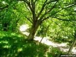Приусадебный зем. участок в Арагацотнской области - фото 1