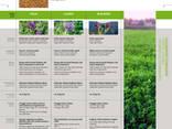 Семена Люцерны (Medicago sativa) - фото 2