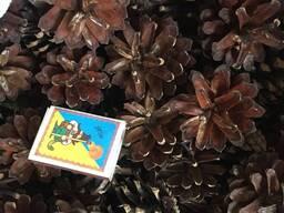 Шишка сосны по 0,10 $ , сосновая шишка , шишка сосновая для декора, шишка